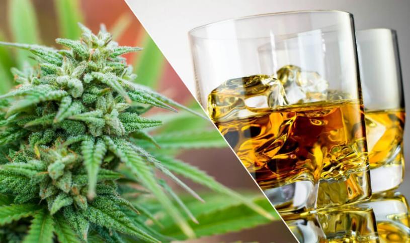 Марихуана алкоголизма футаж марихуана